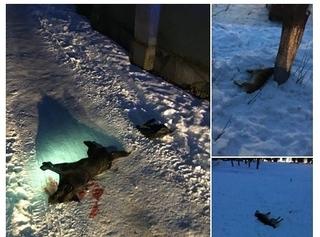 Фото Оксани Юрченко. Цих трьох собак вбили біля мототреку цієї зими.