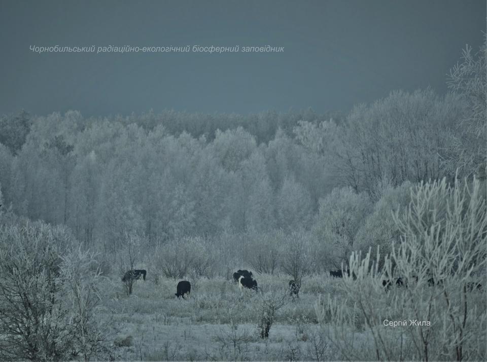 Фото Сергія Жили