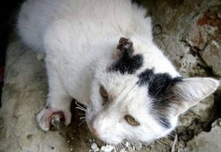 """Кіт, якого нібито підпалив мешканець одного з будинків на Коновальця, в Рівному. Фото - ТРК """"Рівне 1"""""""